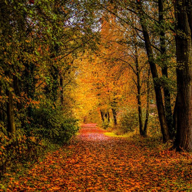 """Autumn Alley #2"" stock image"
