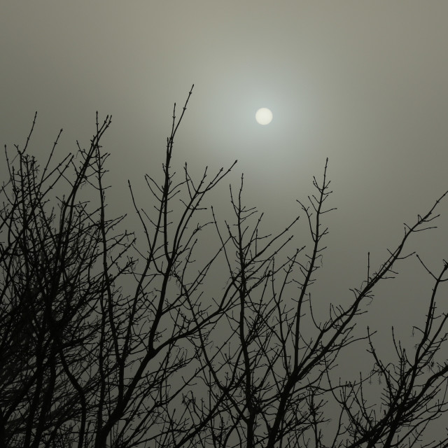 """Sun Through Fog"" stock image"