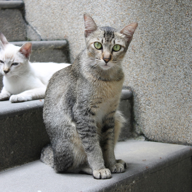 """Stray cats on the steps"" stock image"