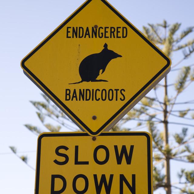 """""""Aussie hazards"""" stock image"""