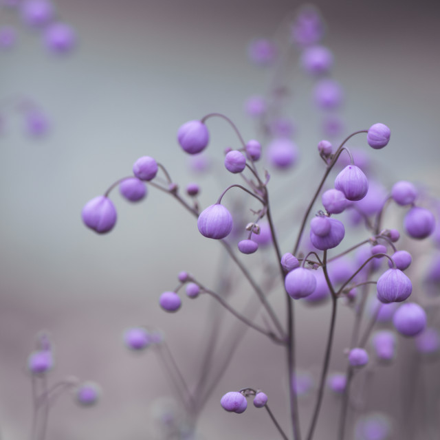 """Pretty Flower Buds"" stock image"