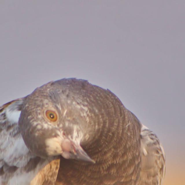 """Bird resting"" stock image"