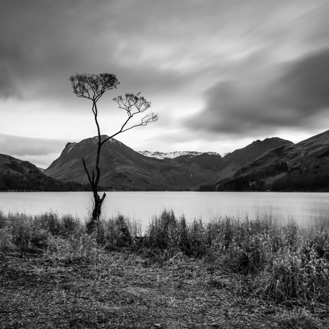 """Buttermere Lone Tree"" stock image"