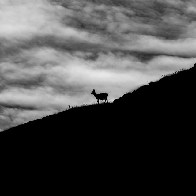 """Deer Silhouette"" stock image"