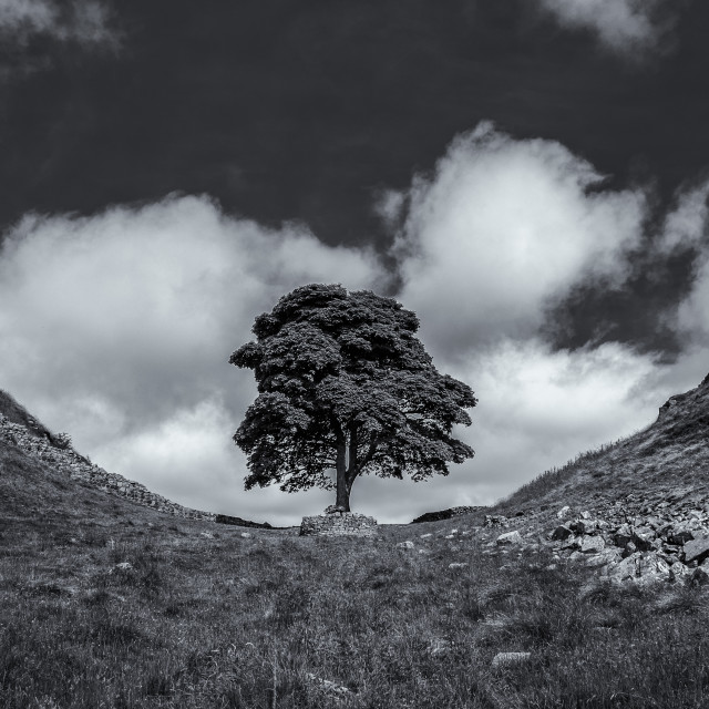 """Sycamore Gap"" stock image"