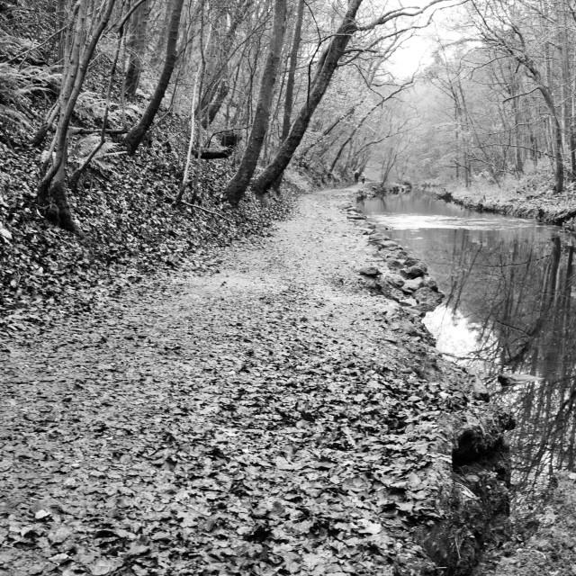 """Woodland River"" stock image"