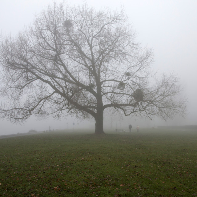 """Riverside Park, Southampton on a foggy day"" stock image"