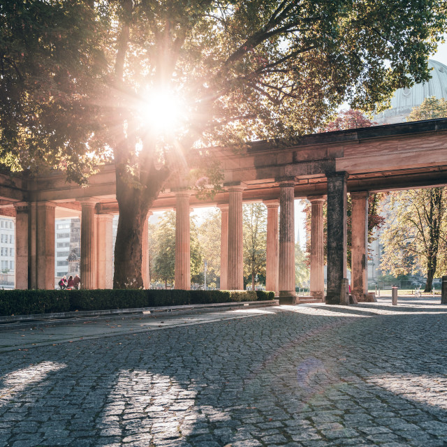 """Autumn sun shining through a tree at Berlin Museum island"" stock image"