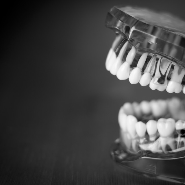 """""""Denture for dentistry students"""" stock image"""