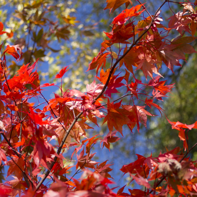 """Red Autumn"" stock image"