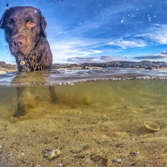 """""""Doggy paddle"""" stock image"""