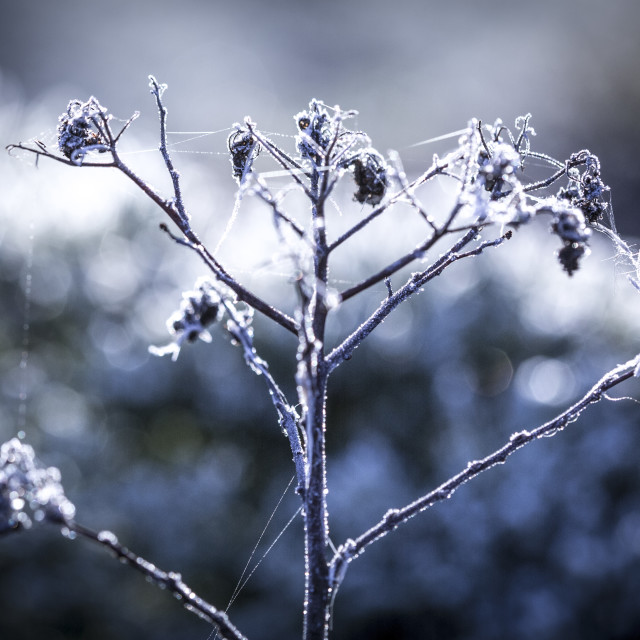 """Frosty December"" stock image"