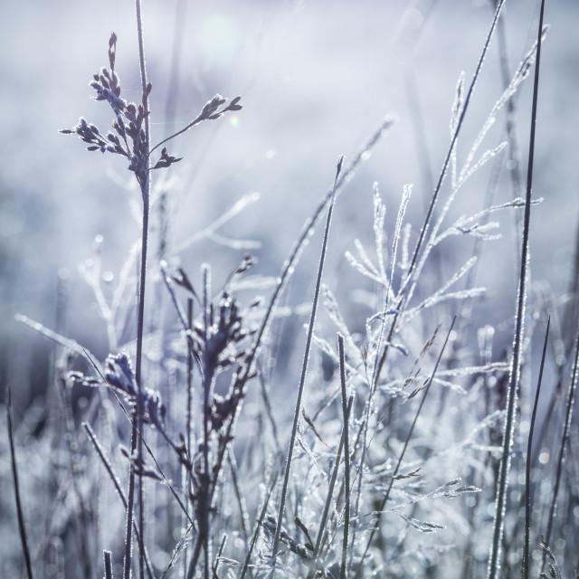 """Frosty Field"" stock image"