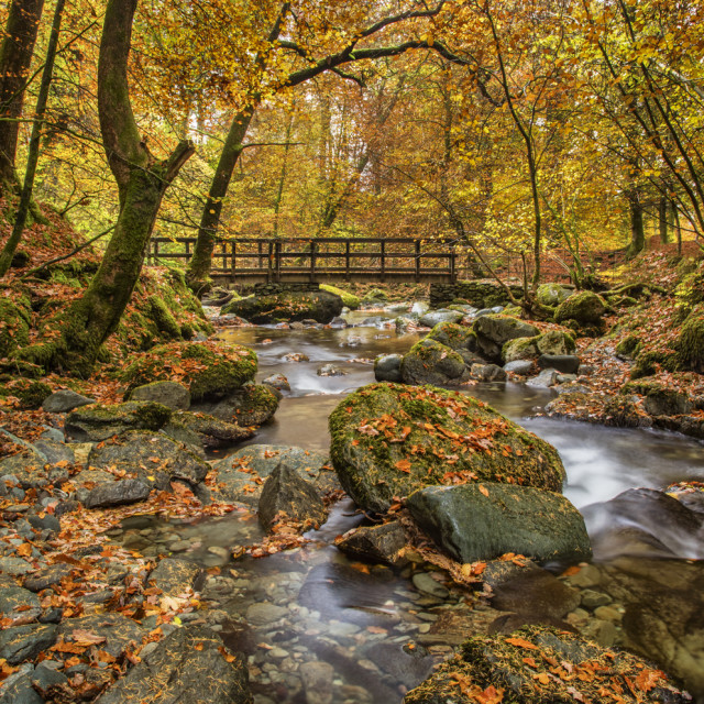 """Stock Ghyll in autumn colour"" stock image"