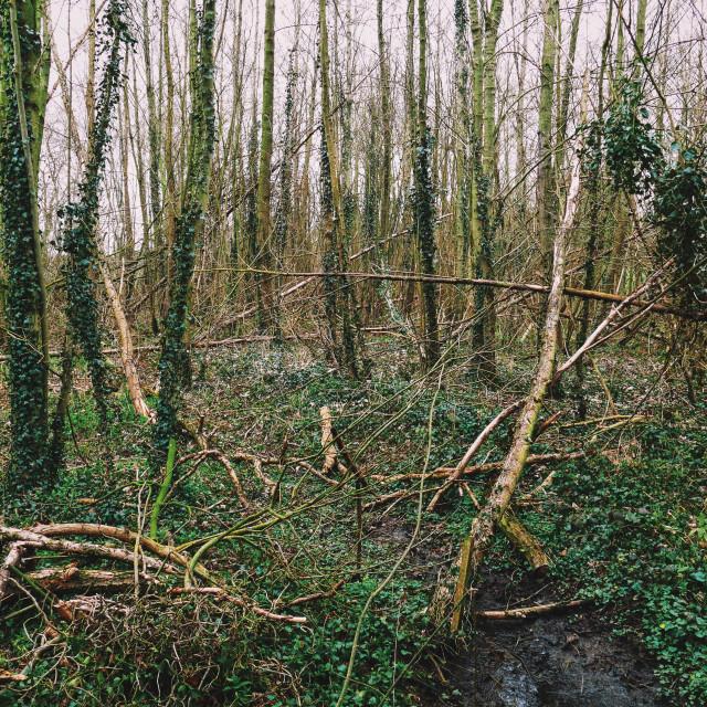 """""""Woodland"""" stock image"""
