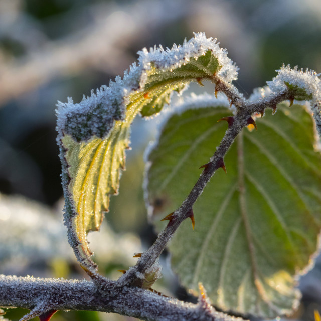 """Frosty Morning"" stock image"