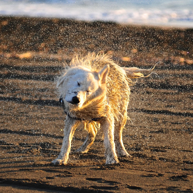 """""""Shaking dog"""" stock image"""