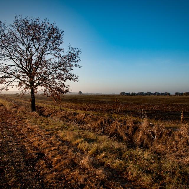 """Lone tree in landscape"" stock image"