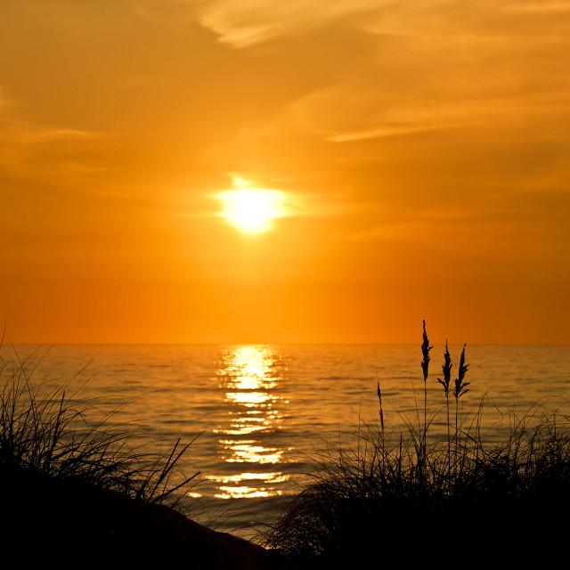 """""""Sea oats sunrise, Outer Banks, North Carolina, USA"""" stock image"""