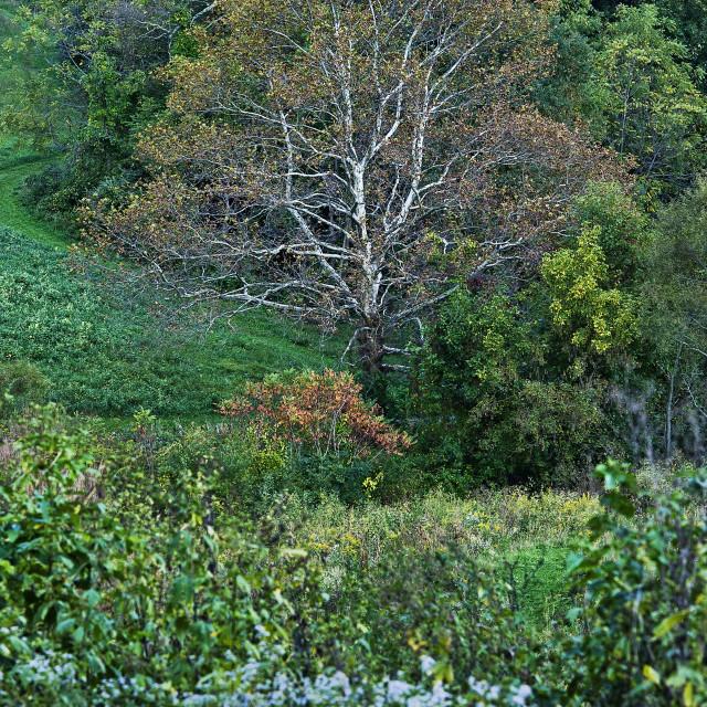 """Scenic landscape, Stroud Preserve, Chester County, Pennsylvania, USA"" stock image"