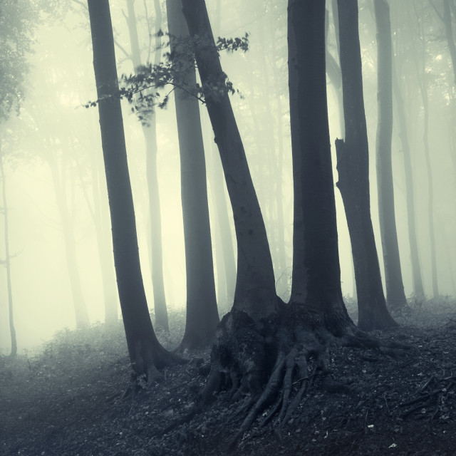 """Haunted forest with fog on Halloween"" stock image"
