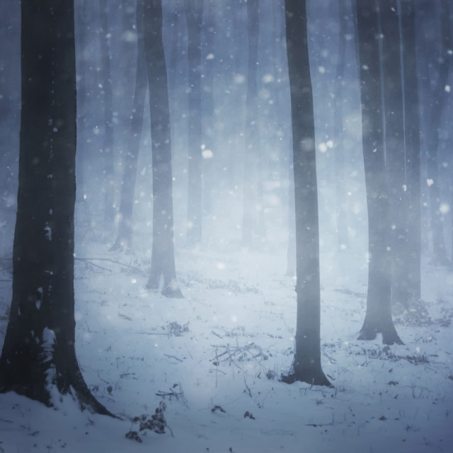 """Snow flakes in mysterious winter forest with snow"" stock image"