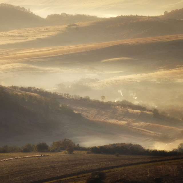 """""""Meadow in autumn in the morning with fog"""" stock image"""