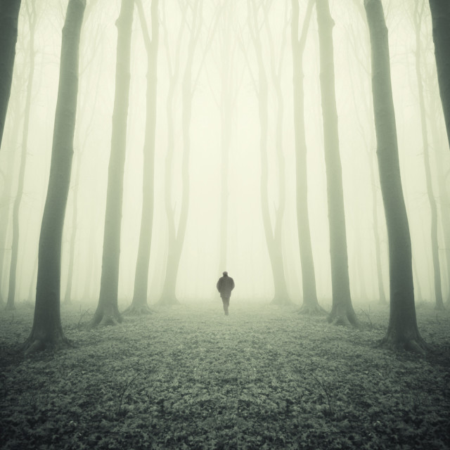 """Man walking in surreal forest with fog trough trees"" stock image"