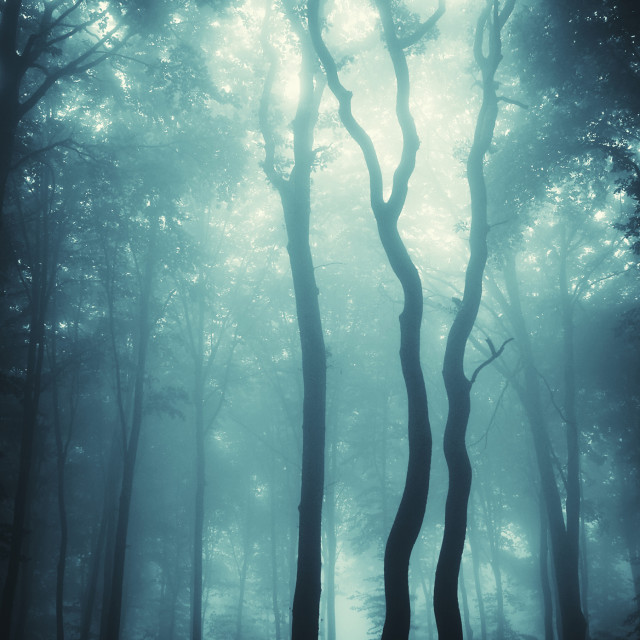 """Fantasy forest with mysterious fog"" stock image"
