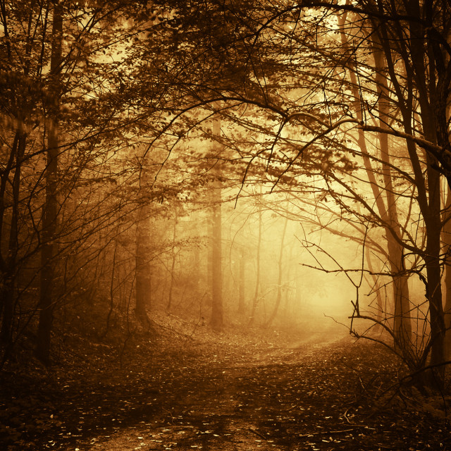"""Path trough an enchanted forest with fog"" stock image"