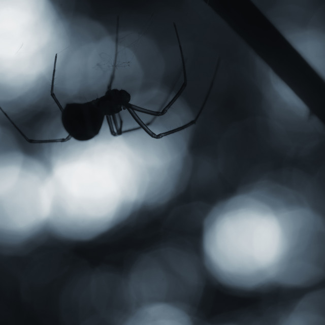 """Spider on Halloween night"" stock image"