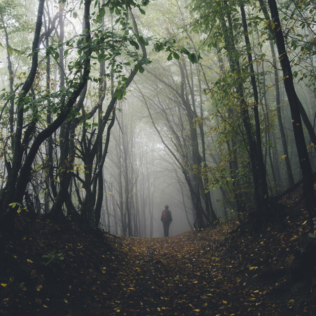 """""""Man in mysterious haunted forest with fog in autumn"""" stock image"""