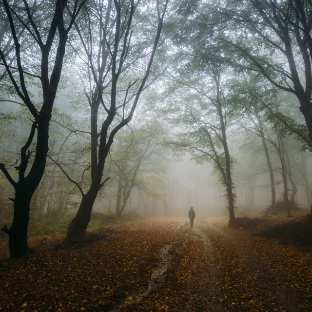"""Man in enchanted fantasy forest with fog in autumn"" stock image"