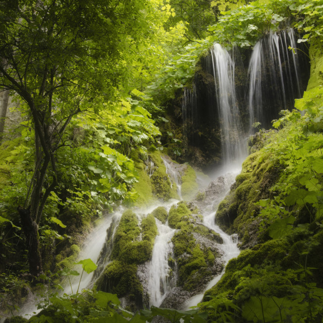 """""""Waterfall with green vegetation"""" stock image"""