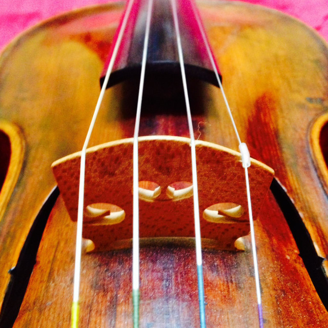"""Violin, close up of strings and bridge"" stock image"