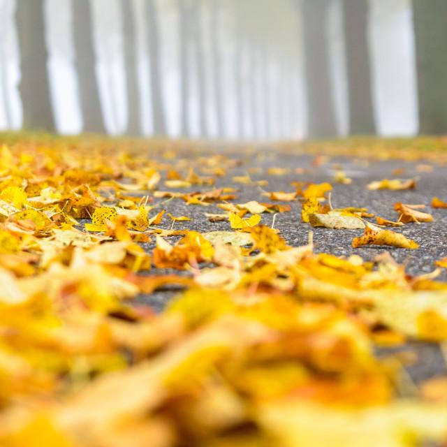 """Foggy Fall"" stock image"
