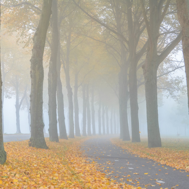 """""""(c)2016 martijnvandernat all rights reserved checkout my blogpost with more awesome autumn images http://www.martijnvandernat.nl/a-lovesong-for-autumn/"""" stock image"""