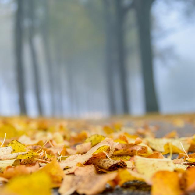 """I heart Autumn"" stock image"