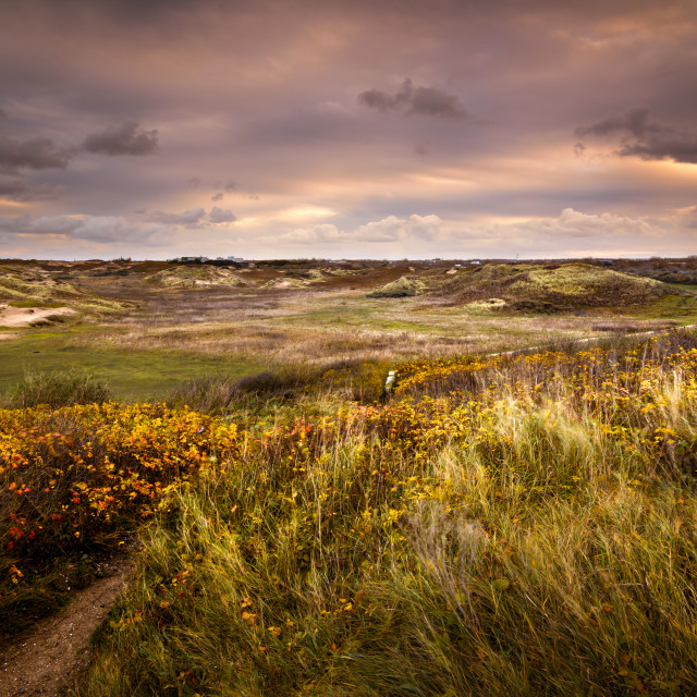 """""""Stormy sunrise in the dunes"""" stock image"""