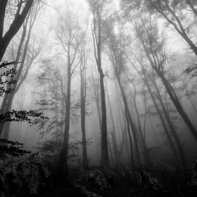 """""""Mistery forest"""" stock image"""