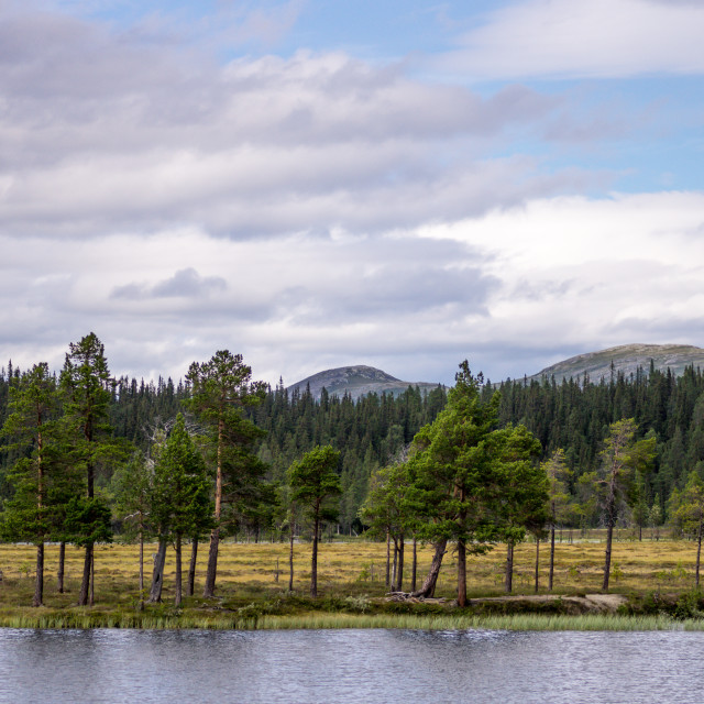 """""""Tarn and mire in the fells"""" stock image"""