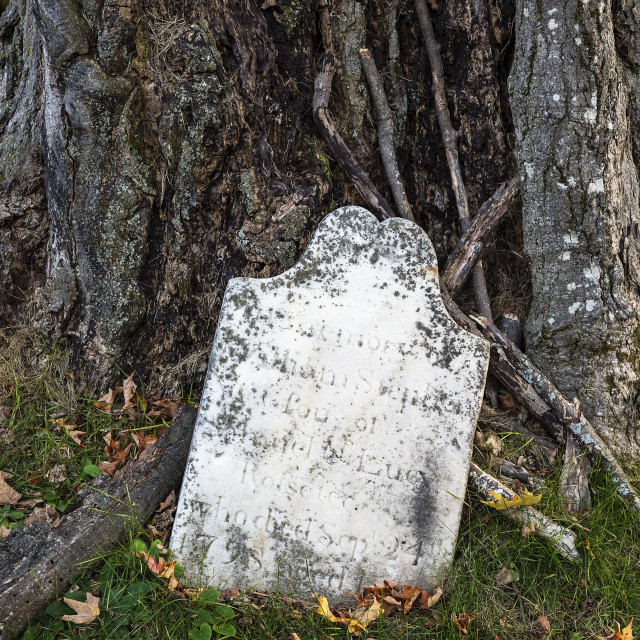"""Ancient grave stone by a tree trunk, Lennox, Massachusetts, USA"" stock image"