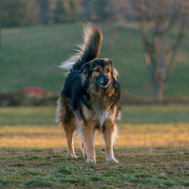 """""""dog in the park"""" stock image"""