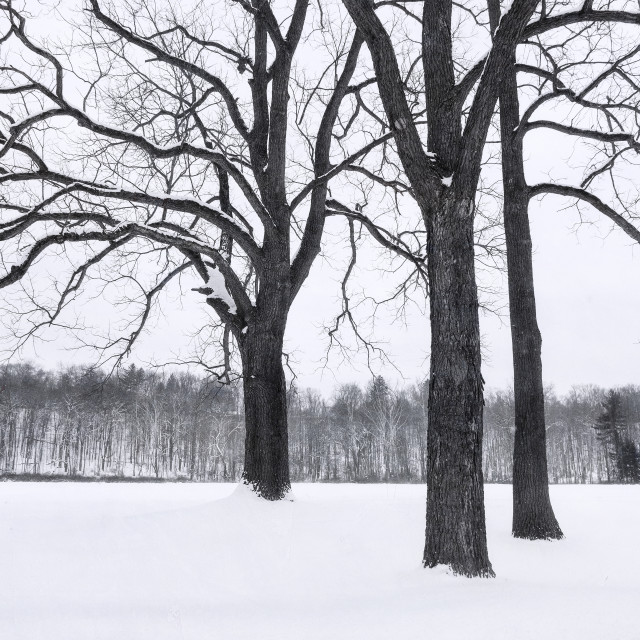 """""""Tree-o In The Snow"""" stock image"""