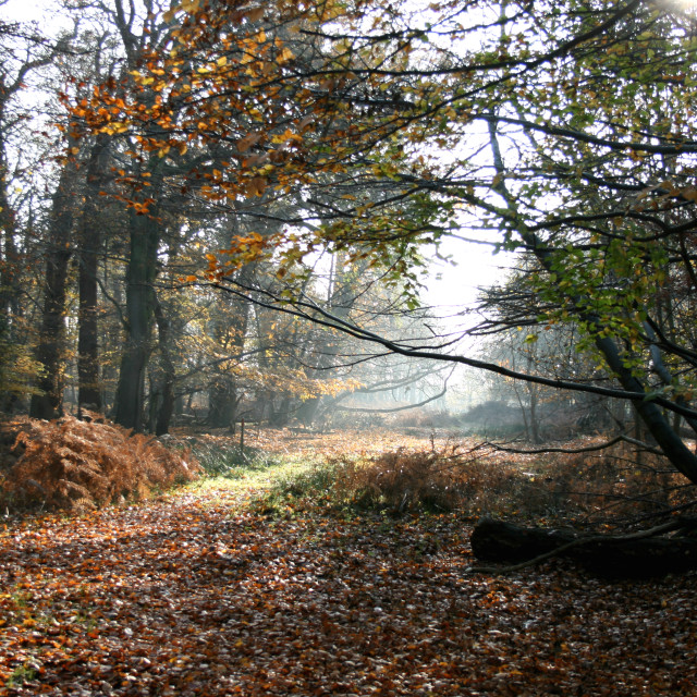 """Woodland Trail, RSPB Minsmere nature reserve"" stock image"