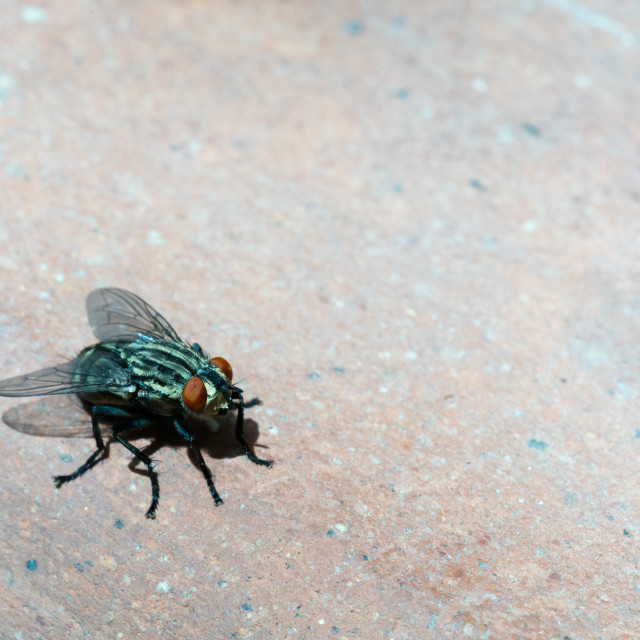 """""""fly, close up"""" stock image"""