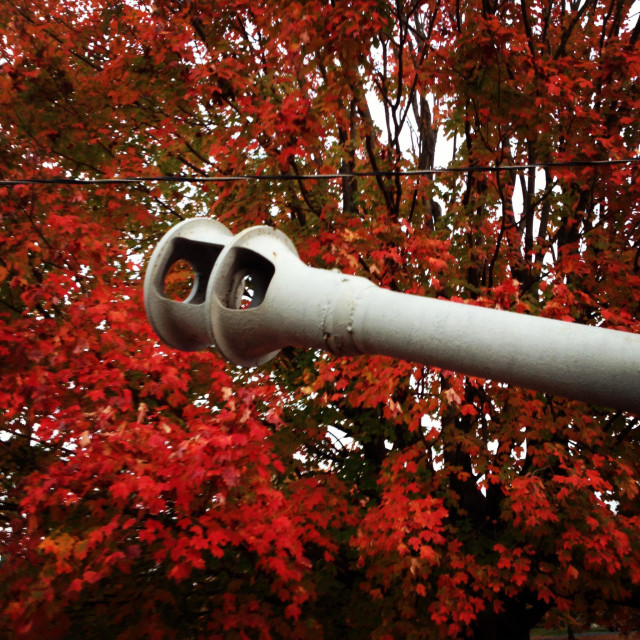"""A piece of artillery juxtaposed with tree full of colorful fall leaves."" stock image"