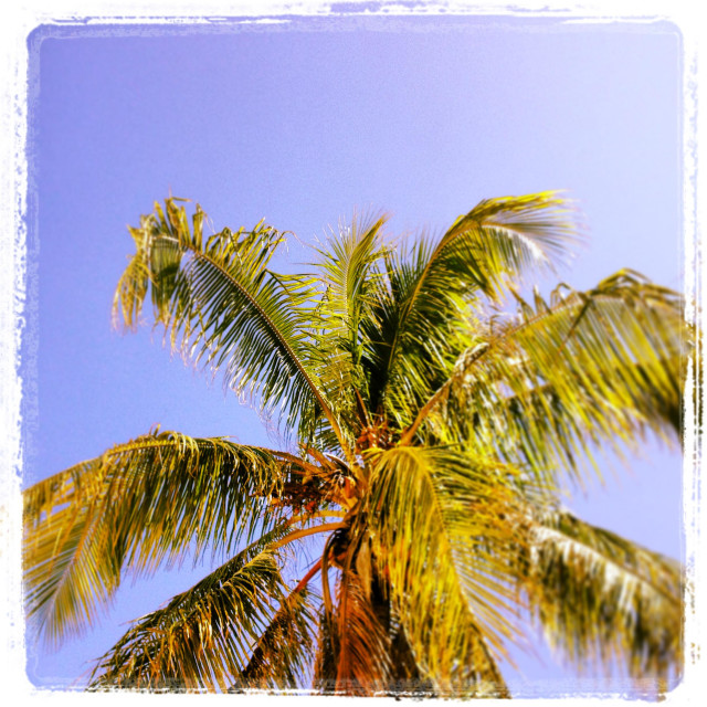 """Sunshine and palm tree"" stock image"