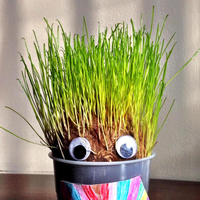 """Kid's craft growing grass."" stock image"