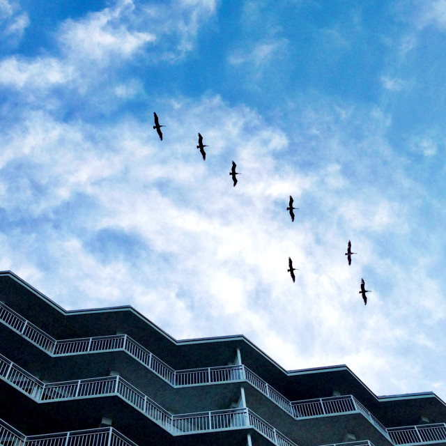 """Birds flying over a condo building."" stock image"